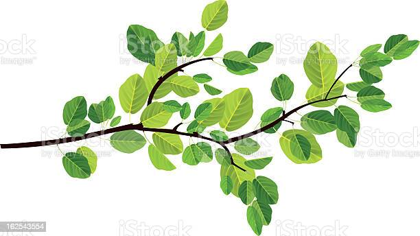 vector file of branch with leaves, transparency used, eps10 file