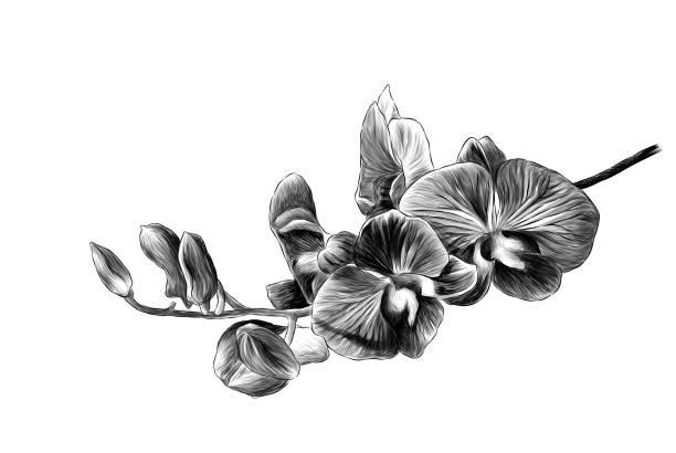 branch with Burgundy Orchid flowers – artystyczna grafika wektorowa