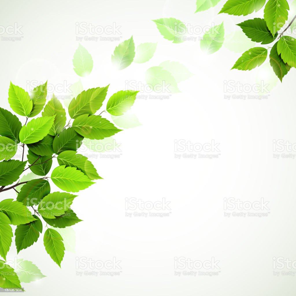 branch with fresh green leaves vector art illustration