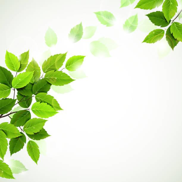 oddział z świeżych zielonych liści - gałąź część rośliny stock illustrations
