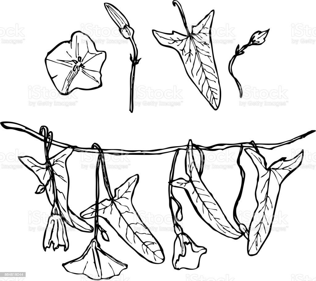Ilustración De Rama Con Hojas De Enredadera De Flores Y Capullos Florales Contornos Sistema Aislados Sobre Fondo Blanco Dibujado A Mano Vector De Y