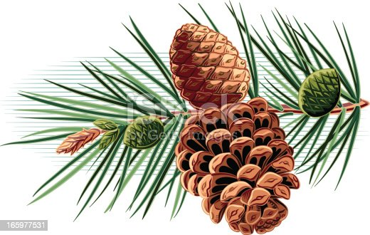 istock branch with pinecones 165977531