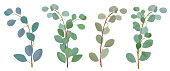 Branches, green leaves of eucalyptus populus, silver dollar. Panoramic view, botanical illustration in watercolor style, horizontal pattern, vector