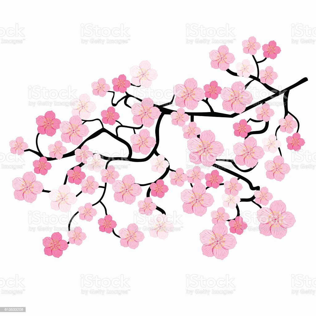 branches of japanese cherry blossoms vector illustration stock rh istockphoto com japanese victories japanese victories ww2