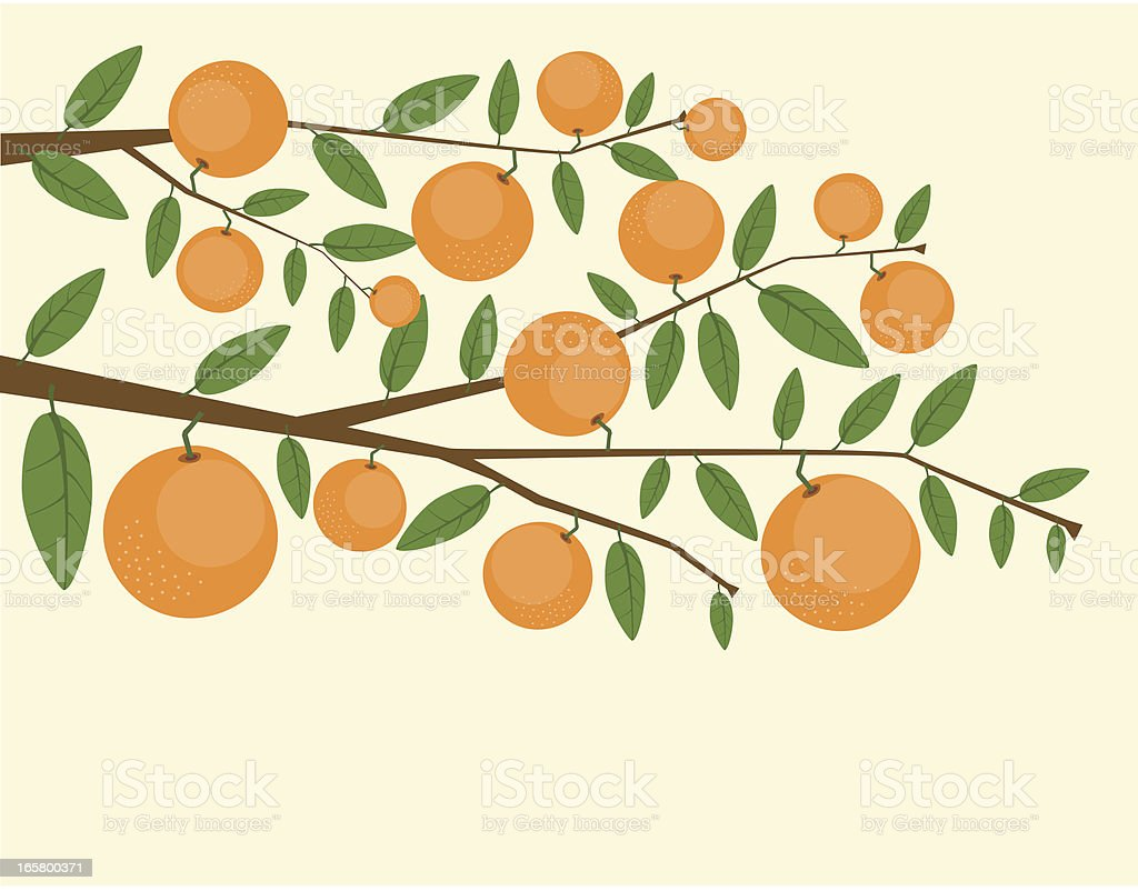 Branches Of Orange Tree vector art illustration