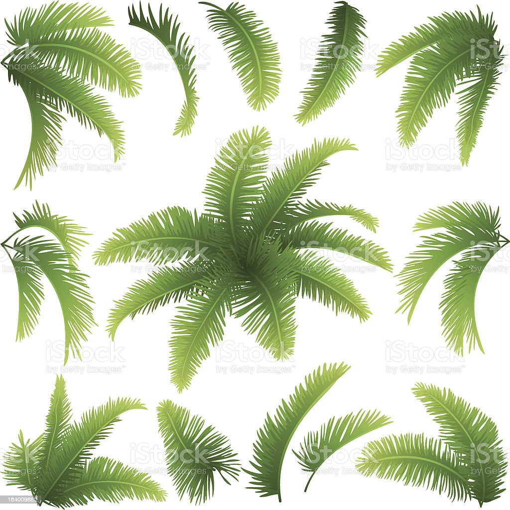 Branches of palm trees vector art illustration