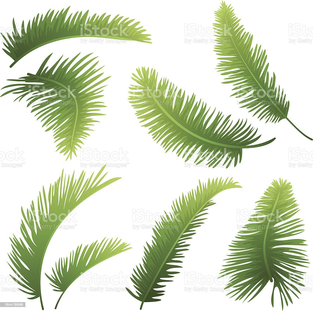 Branches of palm trees royalty-free stock vector art