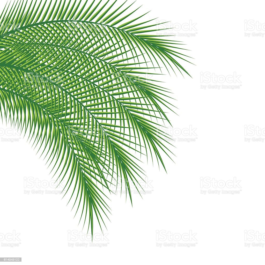 Branches Of Palm Trees stock vector art 614045122 | iStock