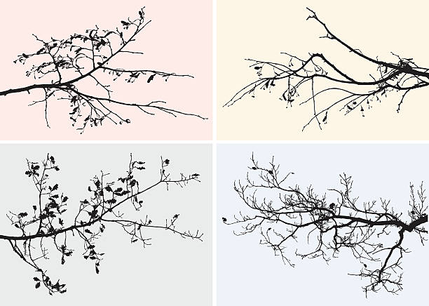 branches of trees in the fall - twig stock illustrations, clip art, cartoons, & icons