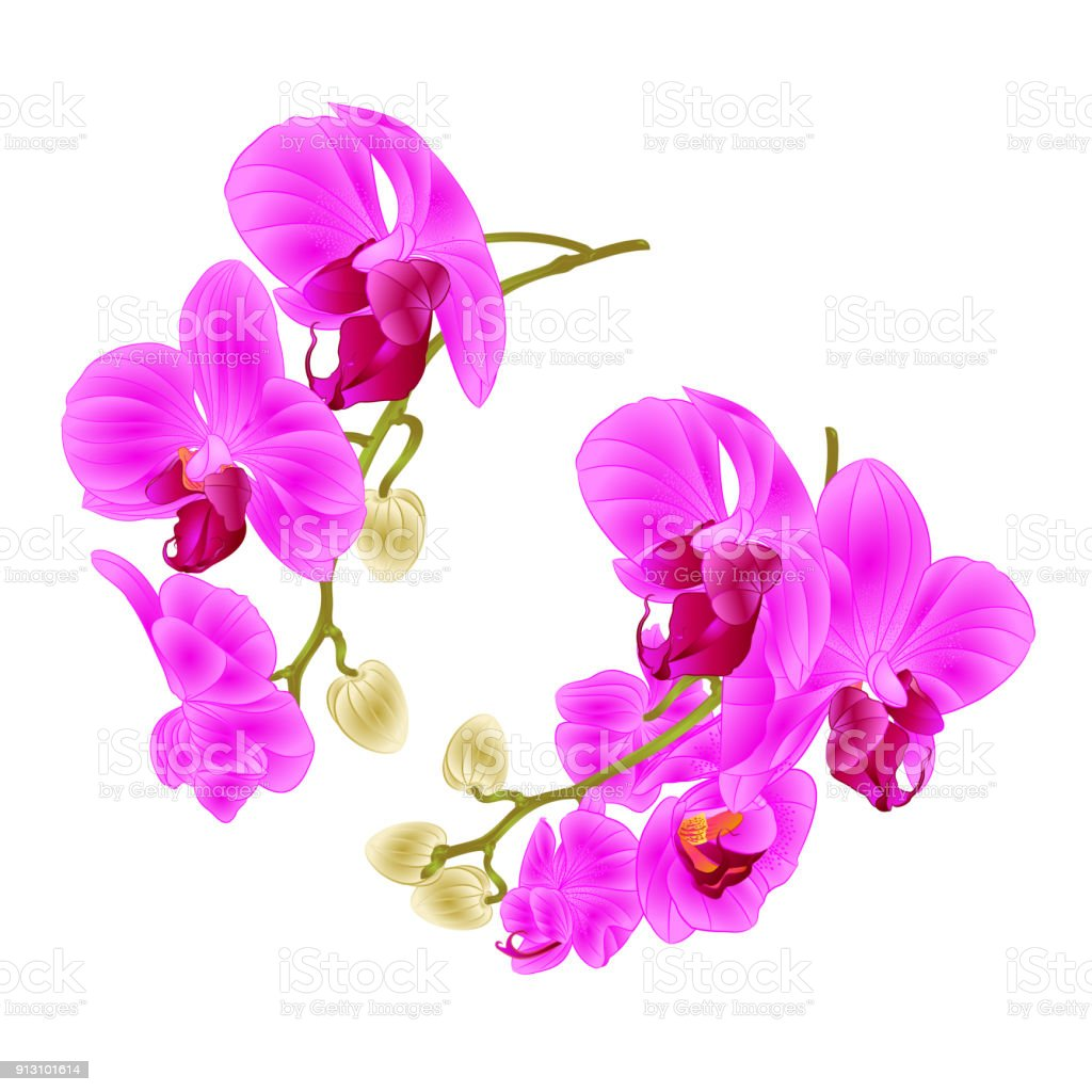 Branches Orchids Purple Flowers Tropical Plant