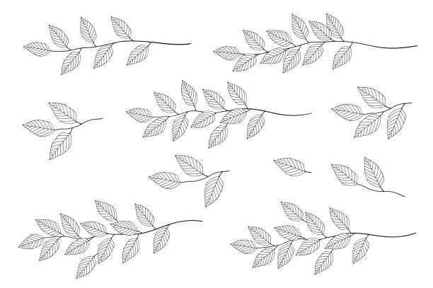 帶葉集的樹枝 - 葉狀花紋 幅插畫檔、美工圖案、卡通及圖標