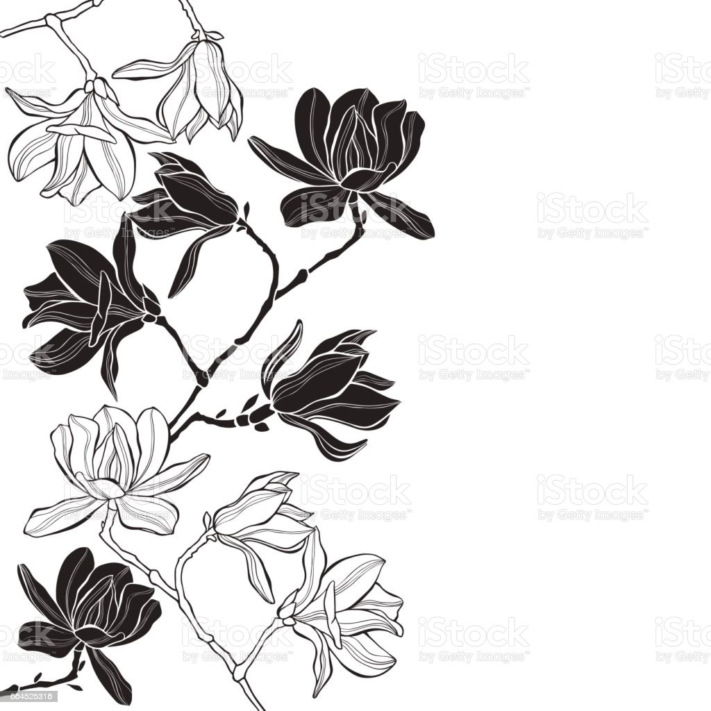 Branches with magnolia flowers on a white background. Floral vector background with space for text. Black and white greeting card or invitation. royalty-free branches with magnolia flowers on a white background floral vector background with space for text black and white greeting card or invitation stock vector art & more images of backgrounds