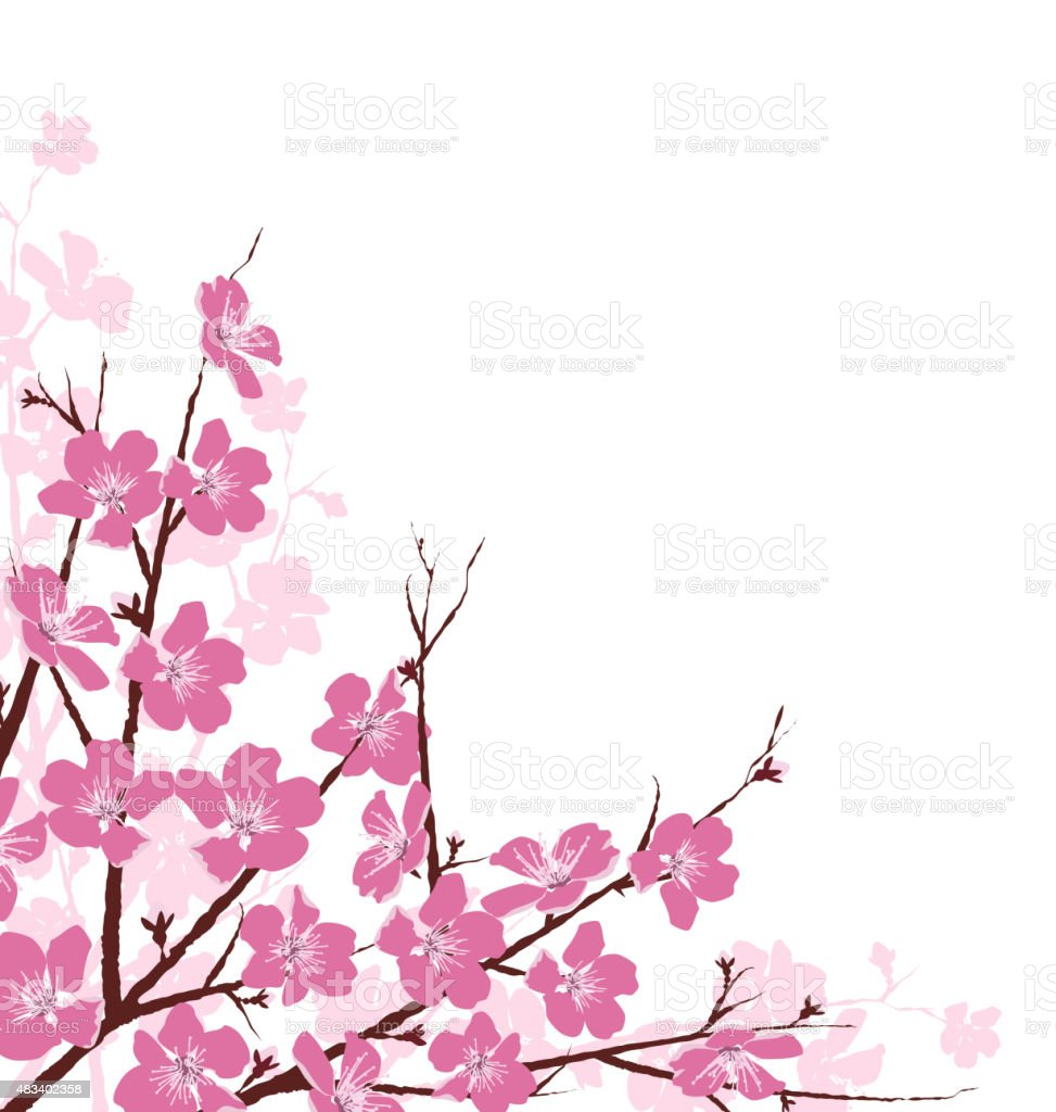 Branches with Pink Flowers Isolated on White vector art illustration
