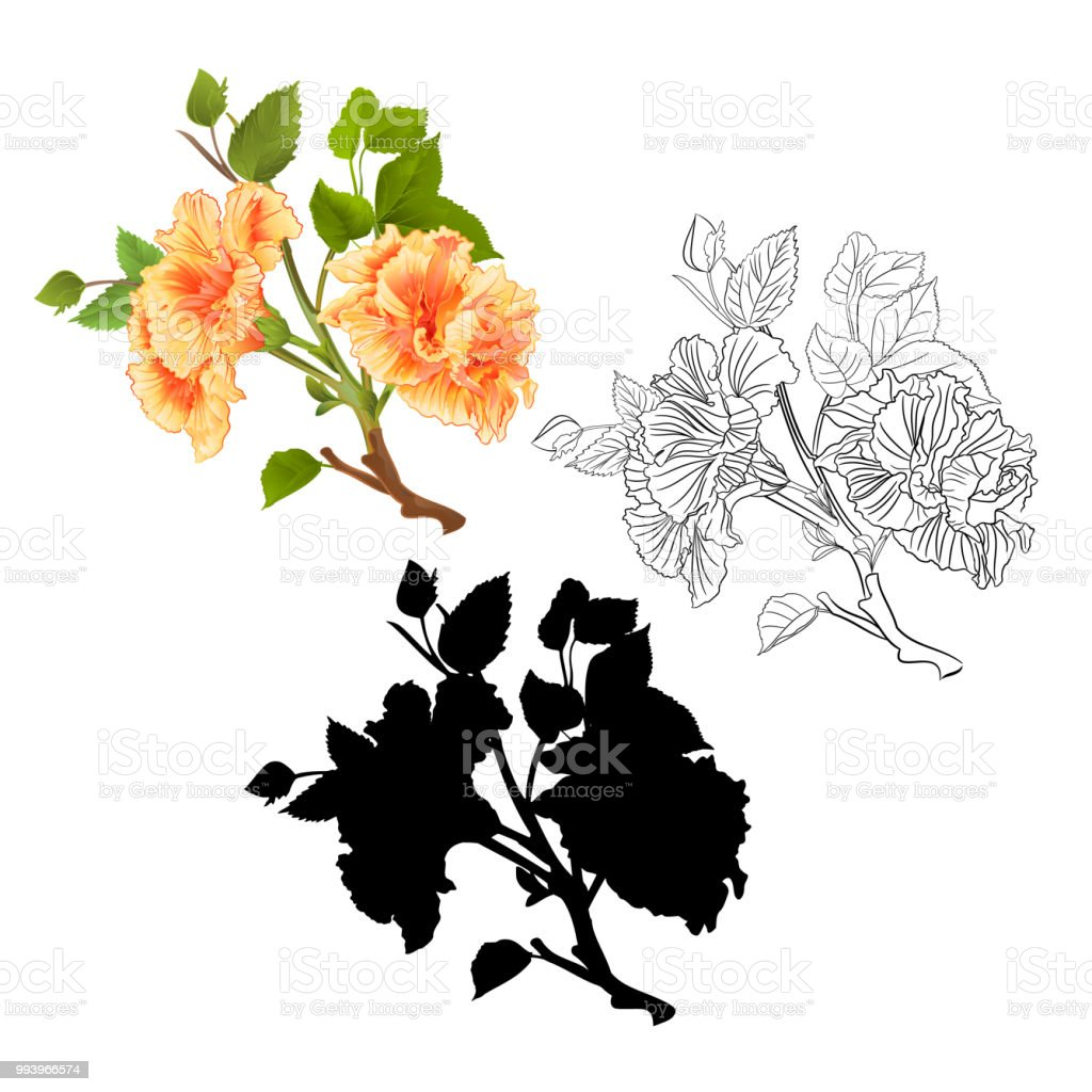 Branches Yellow Hibiscus Tropical Flowers Natural Outline And