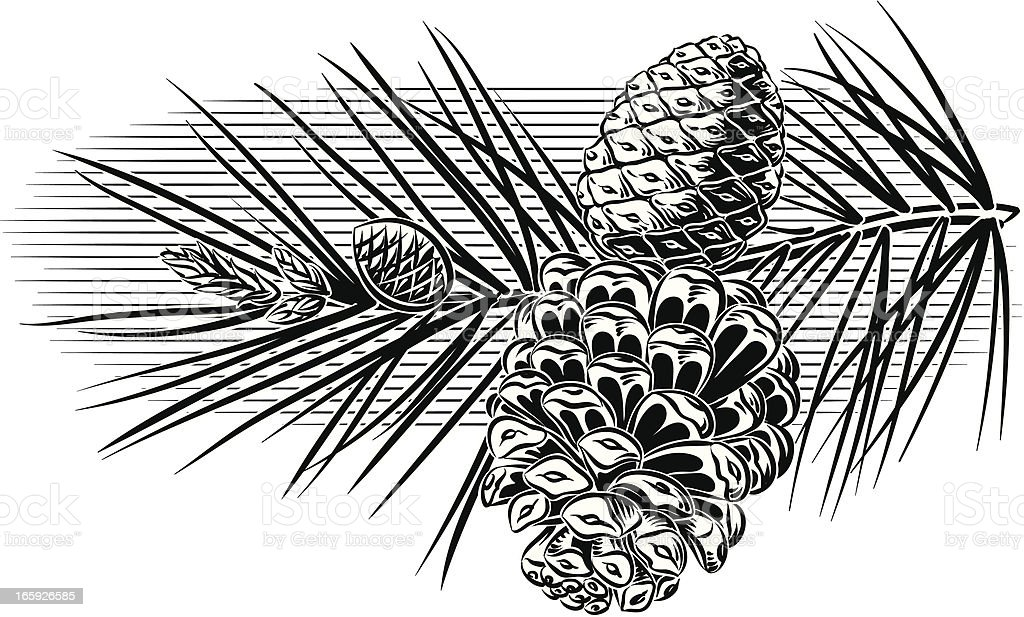 branchWithPinecones royalty-free stock vector art