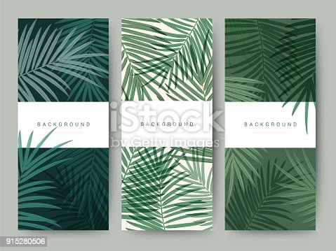 istock Branding Packaging palm coconut bamboo tree leaf nature background, icon banner voucher, spring summer tropical, vector illustration 915280506