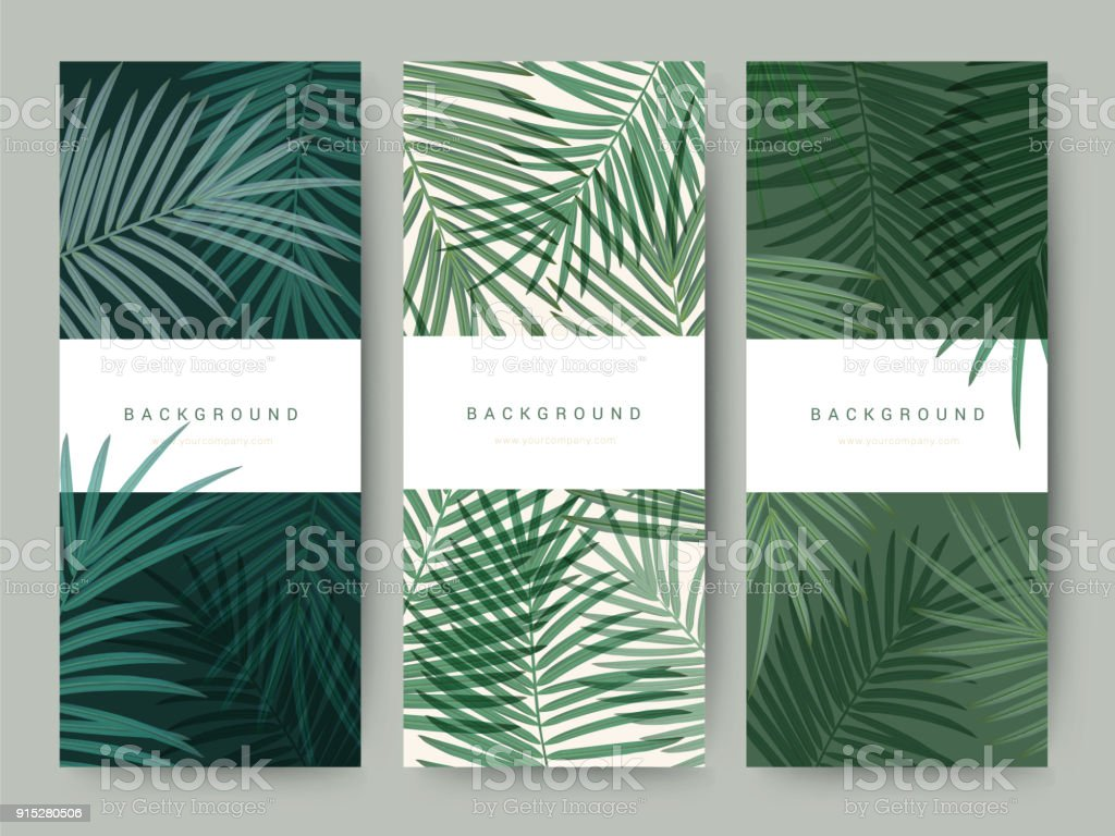 Branding Packaging palm coconut bamboo tree leaf nature background, icon banner voucher, spring summer tropical, vector illustration vector art illustration
