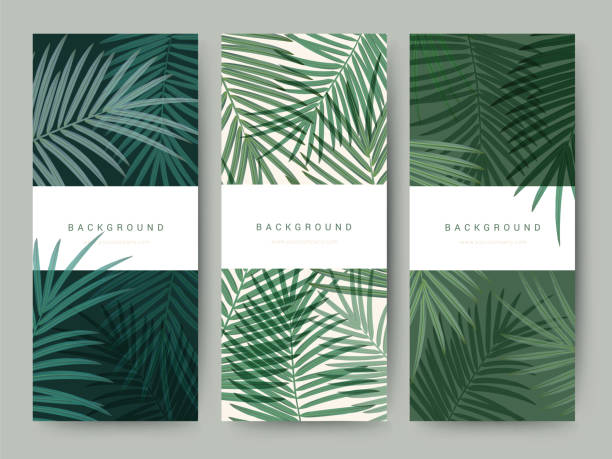 branding packaging palm coconut bamboo tree leaf nature background, icon banner voucher, spring summer tropical, vector illustration - nature travel stock illustrations, clip art, cartoons, & icons