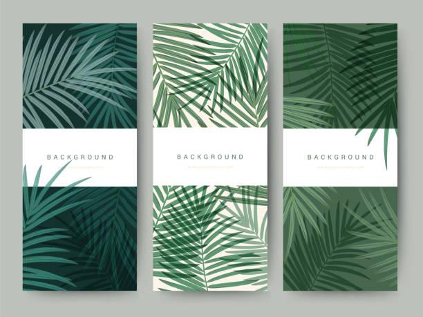 branding, verpackung palm kokosnuss bambus baum blatt natur hintergrund, symbol banner gutschein, frühling sommer tropisch, vektor-illustration - asienreisen stock-grafiken, -clipart, -cartoons und -symbole