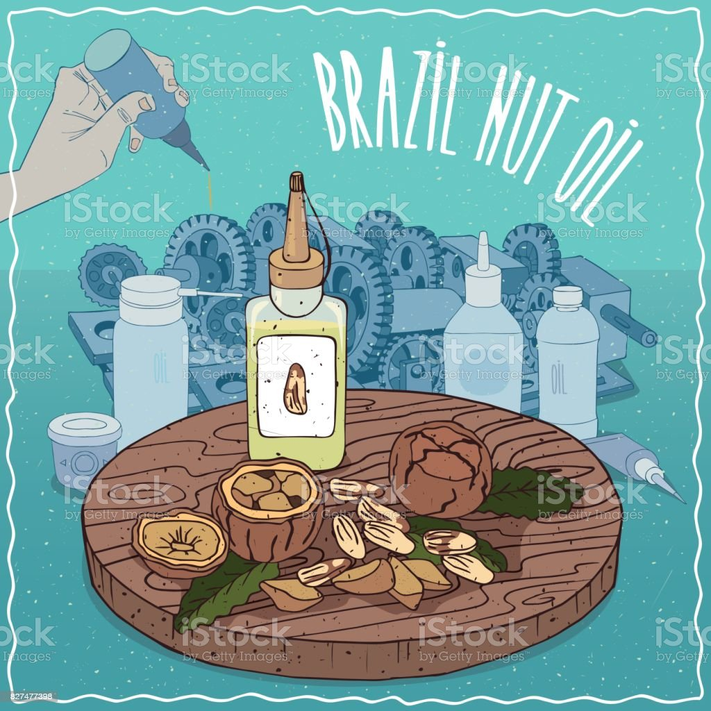 Brazil nut oil used as grease lubricant vector art illustration