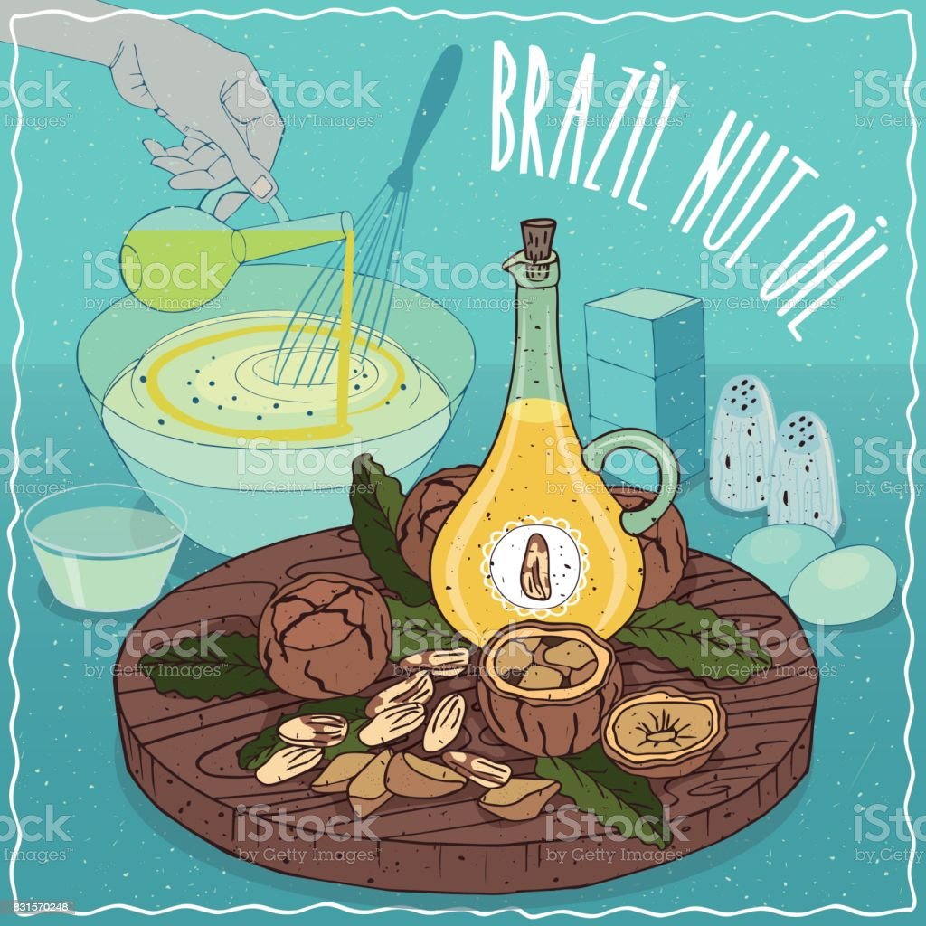 Brazil nut oil used for cooking vector art illustration