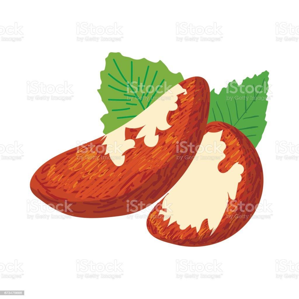 Brazil nuts icon, cartoon style vector art illustration