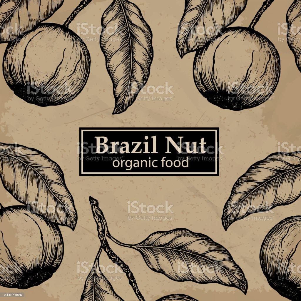 Brazil nuts tree design template. Vintage floral background. Vector illustration. vector art illustration
