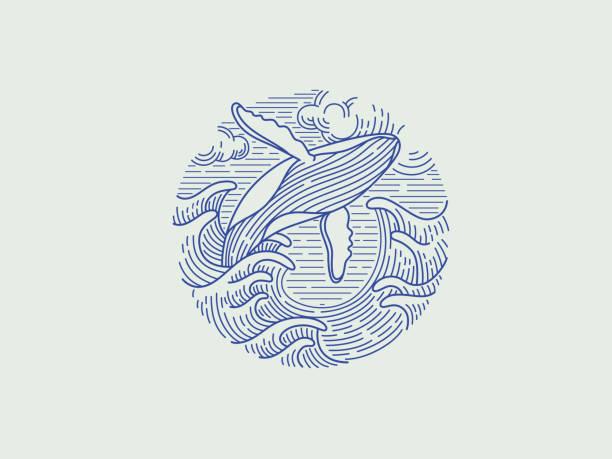 springender buckelwal - wal stock-grafiken, -clipart, -cartoons und -symbole