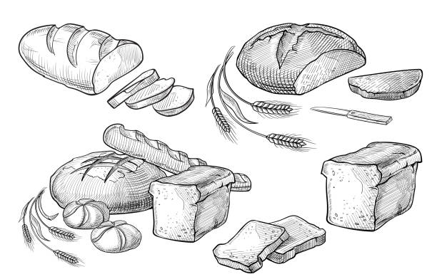 brot wie von hand gezeichnet set vektorgrafik. andere arten von weizen, mehl frisches brot. glutenfreie lebensmittel bäckerei graviert sammlung. schwarz backen bio-lebensmittel - brot stock-grafiken, -clipart, -cartoons und -symbole