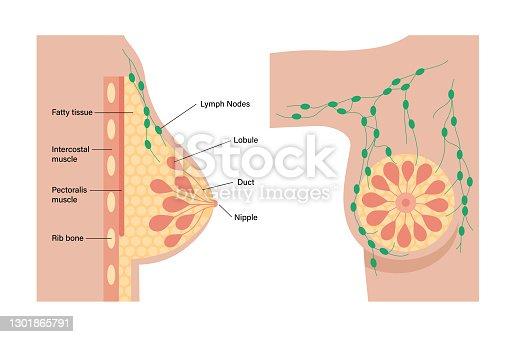 istock Breast disease concept 1301865791