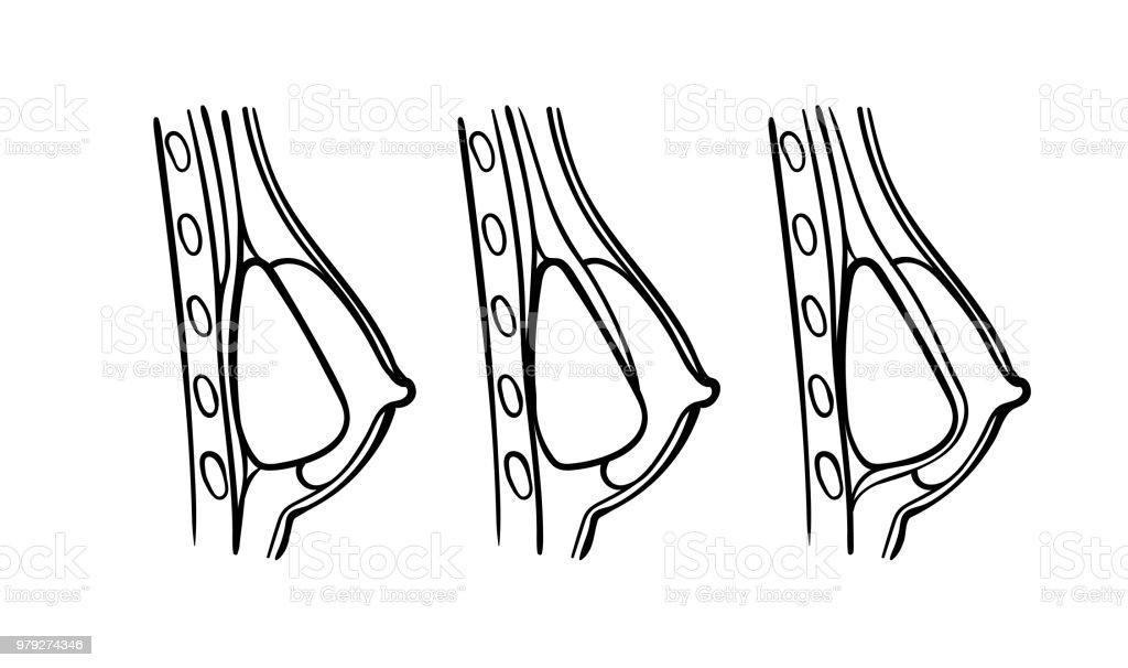 Unique Anatomische Position Arbeitsblatt Pictures - Kindergarten ...