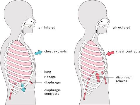 Breathing Diagram