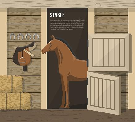 breed horse illustration