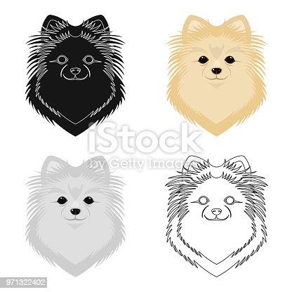 Ilustración de Raza De Perro Perro De Pomerania Boca Spitz único ...