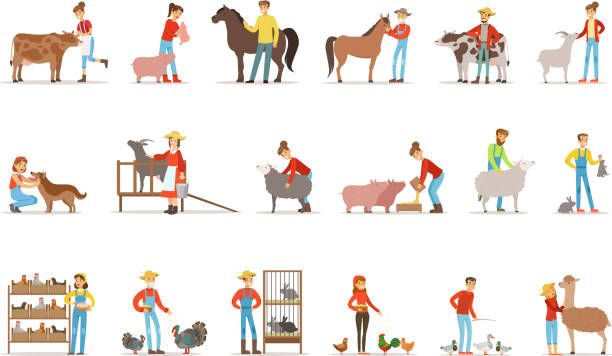 Breeding animals farmland. Farm profession worker people breeding livestock. Set of colorful cartoon detailed vector Illustrations Breeding animals farmland. Farm profession worker people breeding livestock. Set of colorful cartoon detailed vector Illustrations isolated on white background rancher illustrations stock illustrations