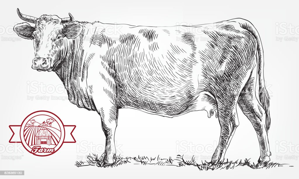 繁殖牛。畜産。家畜 ロイヤリティフリー繁殖牛畜産家畜 - いたずら書きのベクターアート素材や画像を多数ご用意