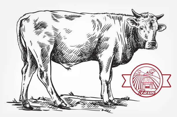 breeding cow. animal husbandry. livestock - cow stock illustrations, clip art, cartoons, & icons