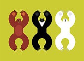 Breeds bears set. Grizzly and himalayan bear and polar bears. evil isolated cartoon style. Wild predator attacks
