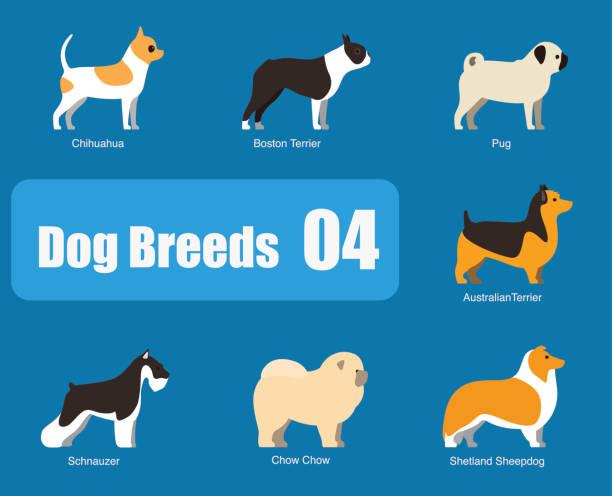 hunderassen hund stehen seite, vektor - collie stock-grafiken, -clipart, -cartoons und -symbole