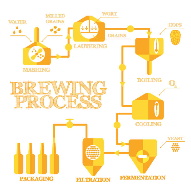 Brewing infographic vector art illustration