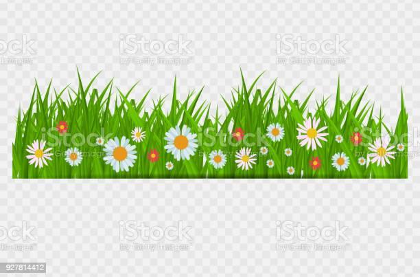 Brighgrass and flowers border greeting card decoration element for vector id927814412?b=1&k=6&m=927814412&s=612x612&h=i8pzhwdjuda1kserf4n7i435xhczlsf x v8f7qxwom=