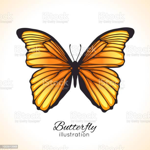 Bright hand drawn butterfly vector id1003510568?b=1&k=6&m=1003510568&s=612x612&h=brqqxl85pcg8vs0lydrbi9vr3mjqhz0obaykxuwf40g=