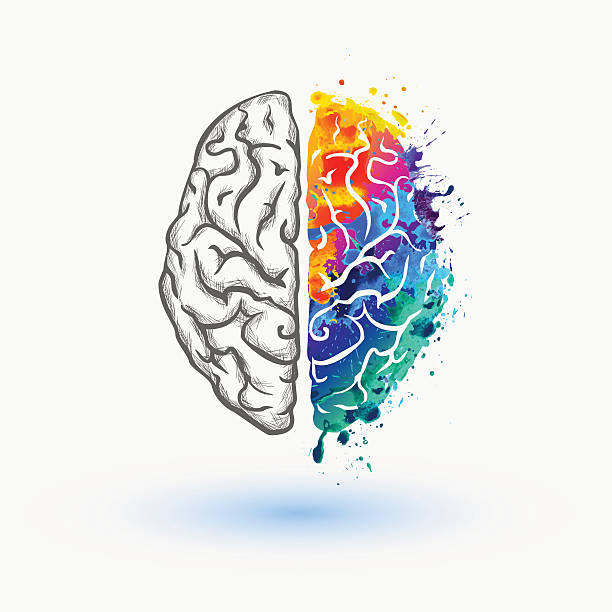 Bright Left and right hemisphere of human brain vector watercolor splash paint brain stock illustrations