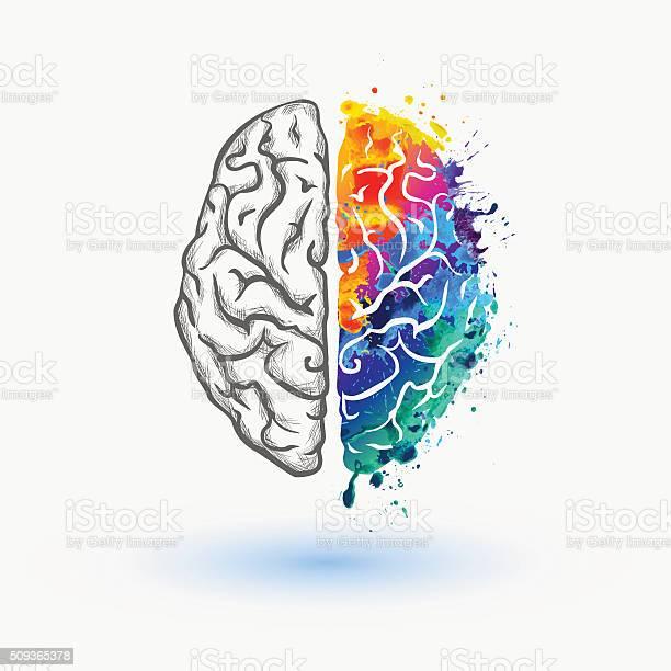 밝은 왼쪽 및 오른쪽 반구체 인간 뇌 감각 지각에 대한 스톡 벡터 아트 및 기타 이미지