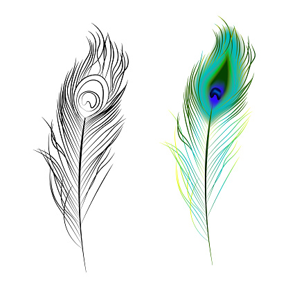 bright multi colored and black and white peacock feather. Design element. Isolated vector on white a background