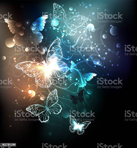 Bright night butterflies vector id902791286?b=1&k=6&m=902791286&s=612x612&h=cyyrfi1o1yrm21fi5fs1dqpmplveb0q6qscnfssbmw4=
