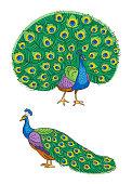 Bright peacock - vector illustration