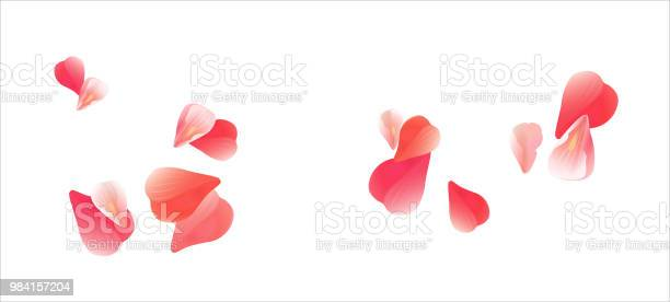 Bright pink flying petals isolated on white background petals in the vector id984157204?b=1&k=6&m=984157204&s=612x612&h=renavyuwmfrh1qnk1q56ctyfrxjmzikdljfdk6jdaku=