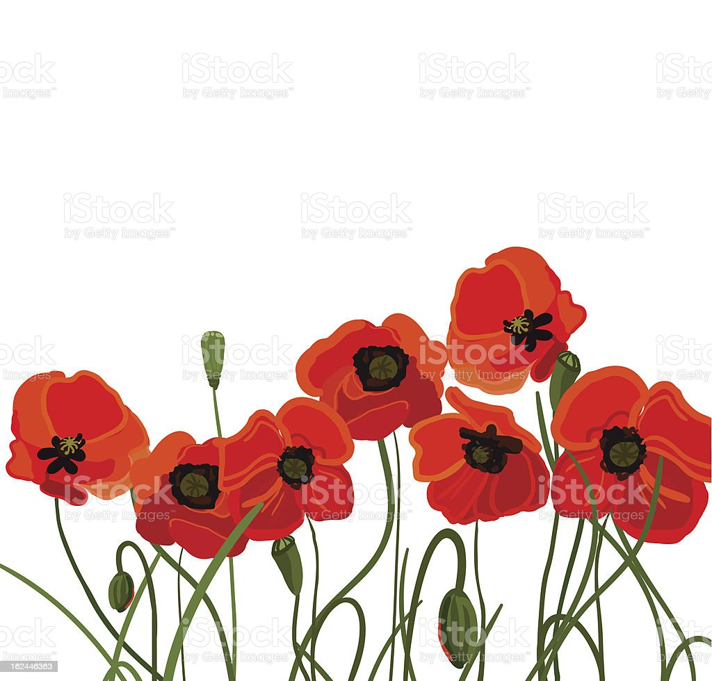 Bright poppies vector art illustration