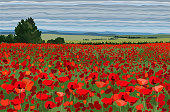 Bright poppy field with bushes, trees and blue sky vector illustration realistic landscape